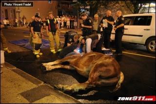 Qu bec animaux d nonce cheval mort d 39 un coup de chaleur - Symptome d un coup de chaleur ...