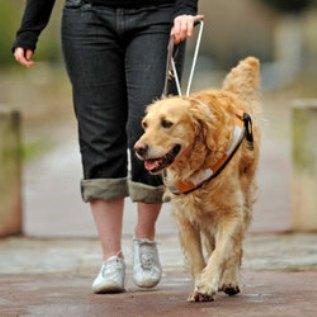 un chien guide d aveugle gravement bless par le m tro. Black Bedroom Furniture Sets. Home Design Ideas