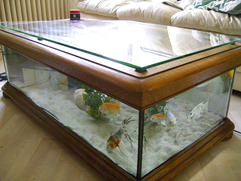 Ma table aquarium 250l for Deco aquarium poisson rouge