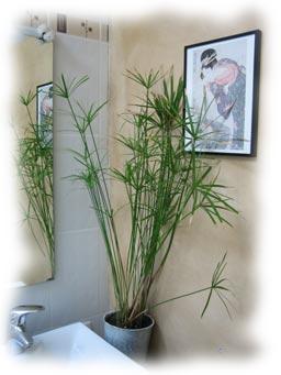 les plantes et fleurs modernes pour nos interieurs. Black Bedroom Furniture Sets. Home Design Ideas