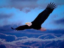 Des ailes pour les Flandres