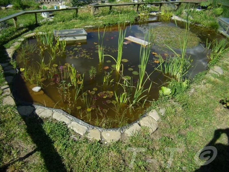 Mon bassin et mes tortues for Bassin exterieur pour tortue