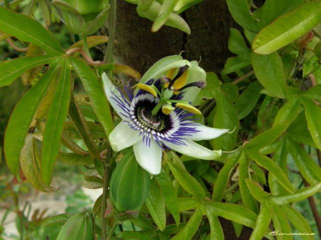 Epanouissement. dans Fleurs et plantes 850_s_14