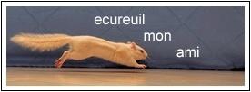 Ecureuil Mon Ami