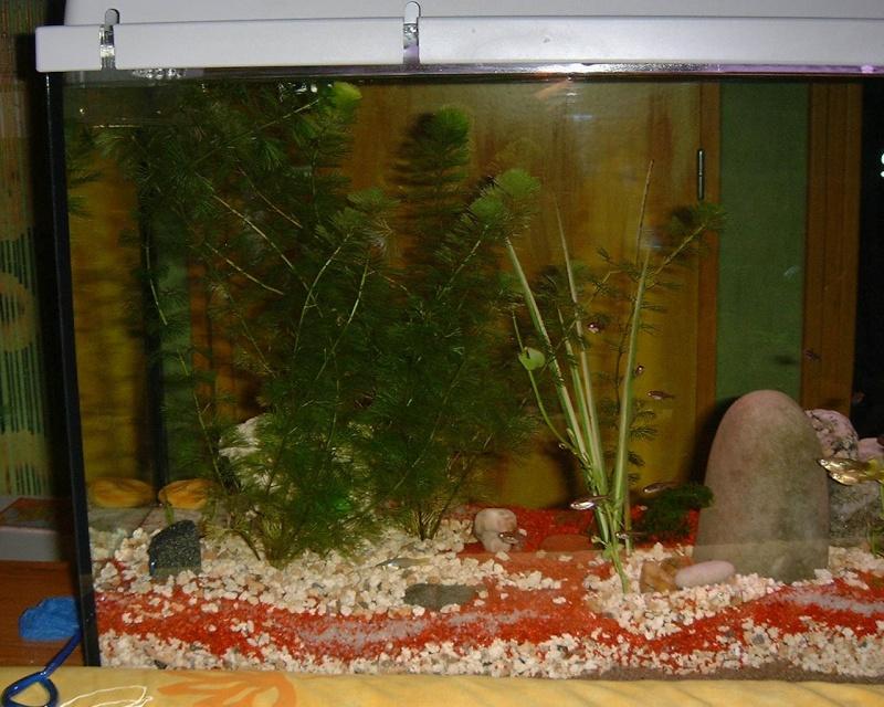 mon aquarium d 39 eau chaude de 100 litres. Black Bedroom Furniture Sets. Home Design Ideas