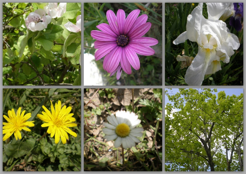 http://i20.servimg.com/u/f20/11/70/33/11/photos18.jpg