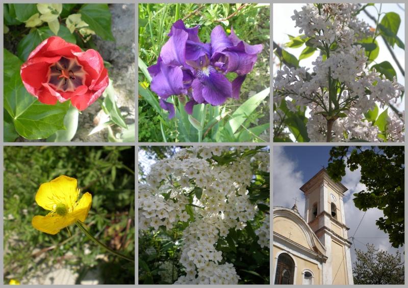 http://i20.servimg.com/u/f20/11/70/33/11/photos19.jpg