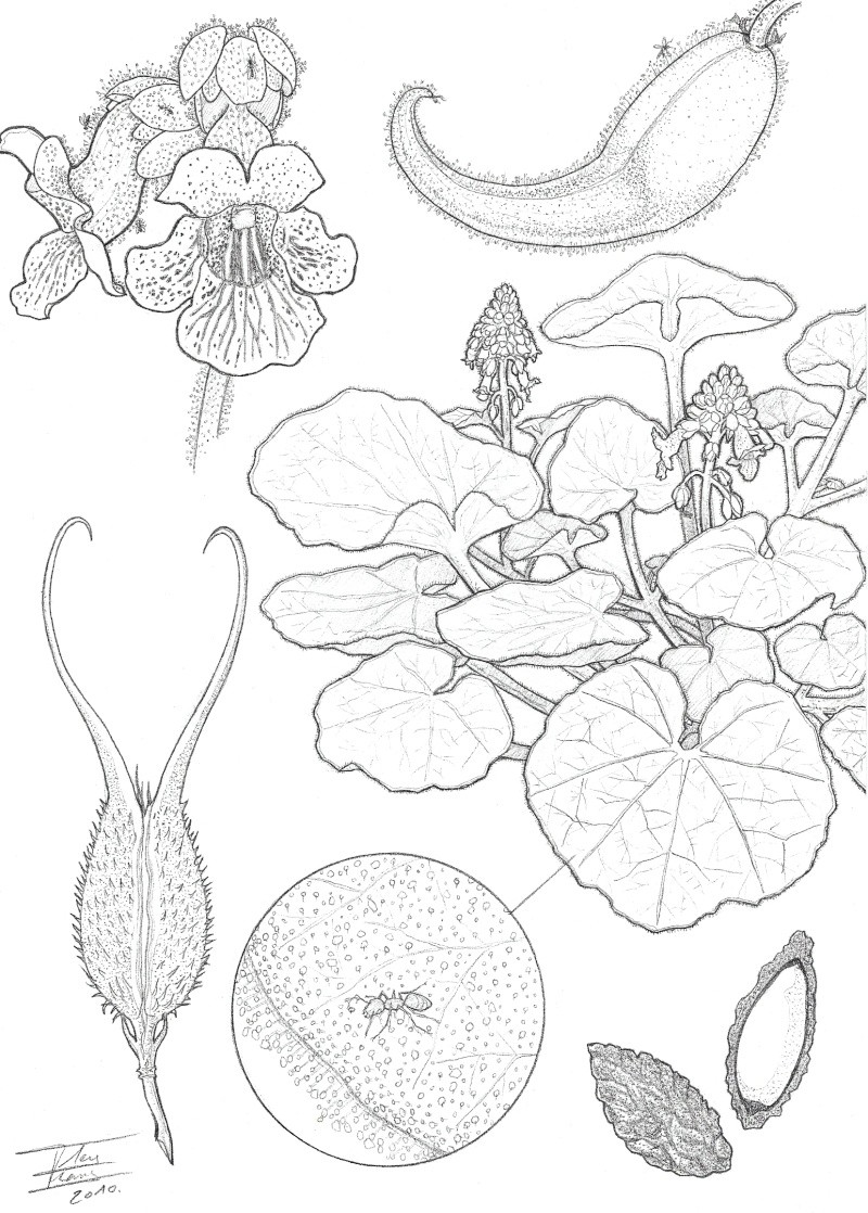Clip Art Botany Coloring Pages botany coloring pages eassume com eassume