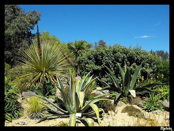 Melvin d photographies archives du blog jardin exotique de roscoff 29 1 - Jardin exotique de roscoff paris ...