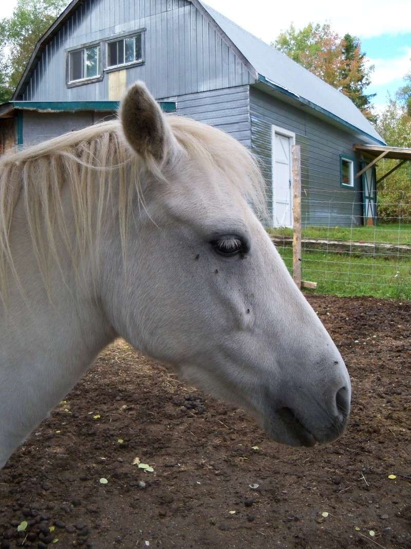 Analyse de la t te d 39 un cheval - Image tete de cheval ...