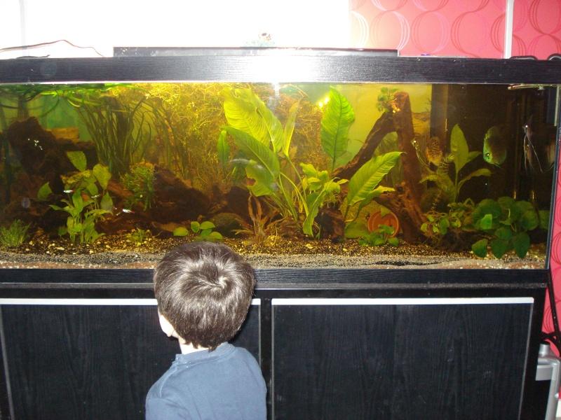 Vend aquarium 450l 38 isere for Vend aquarium