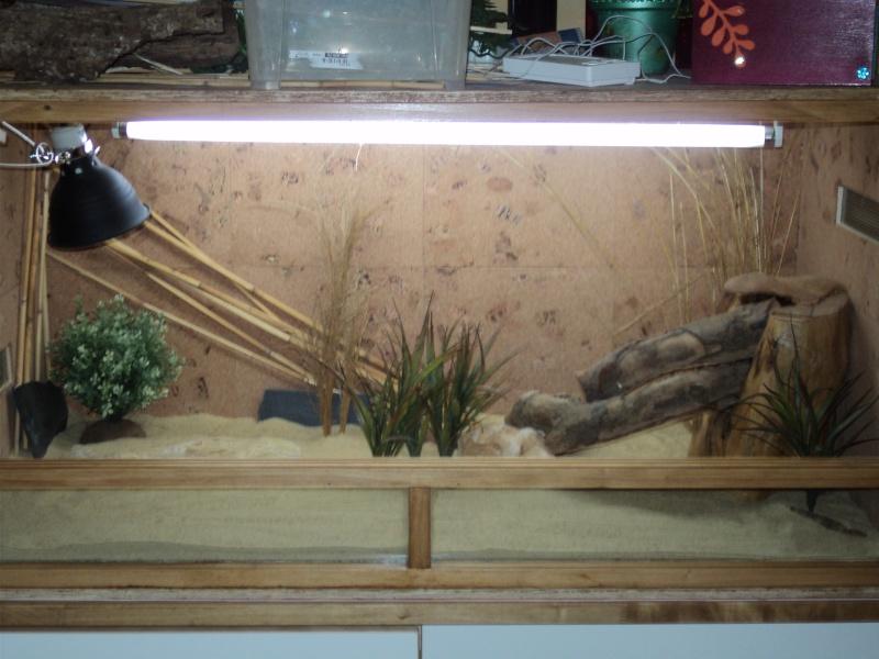 Astuce d cor terrarium d sertique - Decor fond terrarium desertique ...