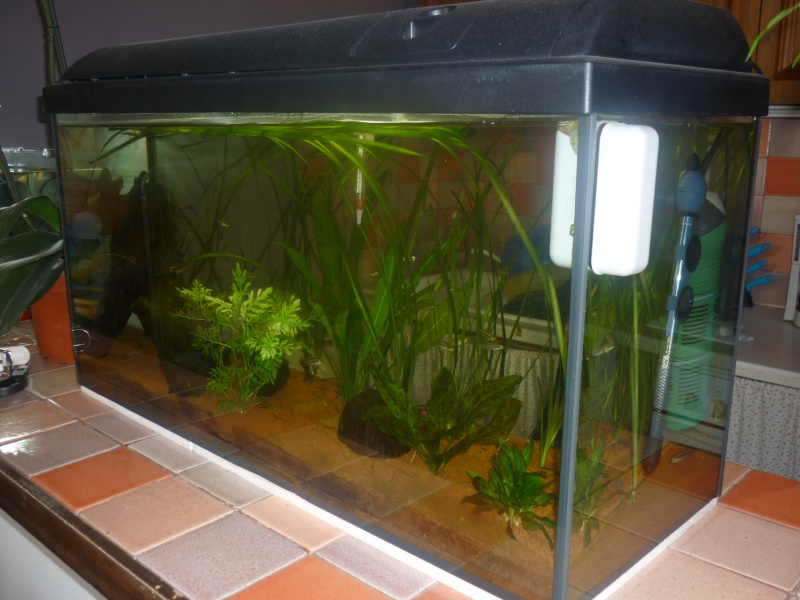 Vend aquarium 100l equip plus materiel 13 for Vend aquarium