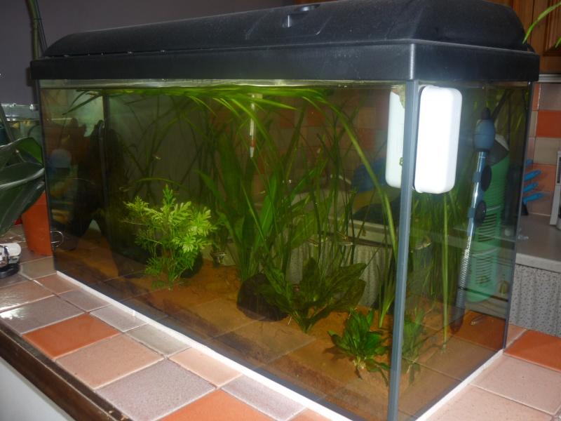 Vend aquarium 100l equip plus materiel 13 for Vend aquarium