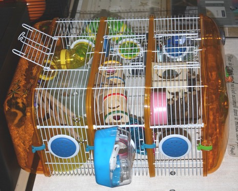 cage gerbille jardiland angers with cage cochon d inde. Black Bedroom Furniture Sets. Home Design Ideas
