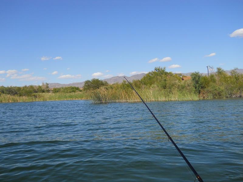 Mesquite bay lake havasu for Lake havasu fishing