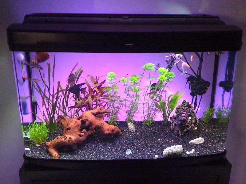 aquarium 120l vendre. Black Bedroom Furniture Sets. Home Design Ideas