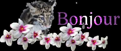 bonjou10.png