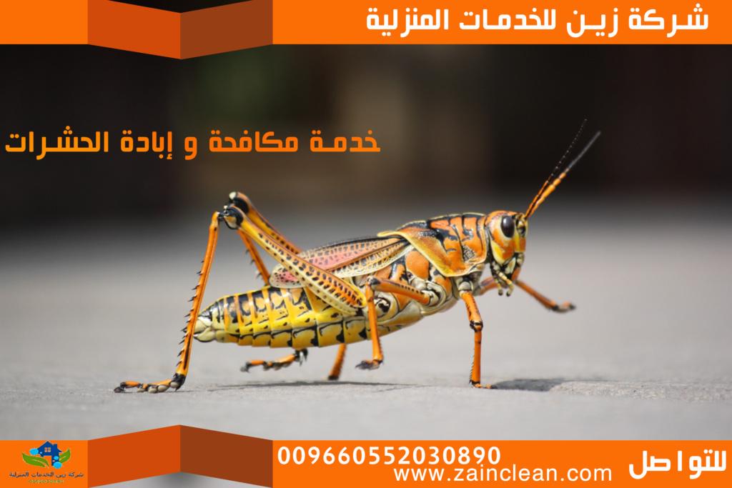 ابادة حشرات بالرياض